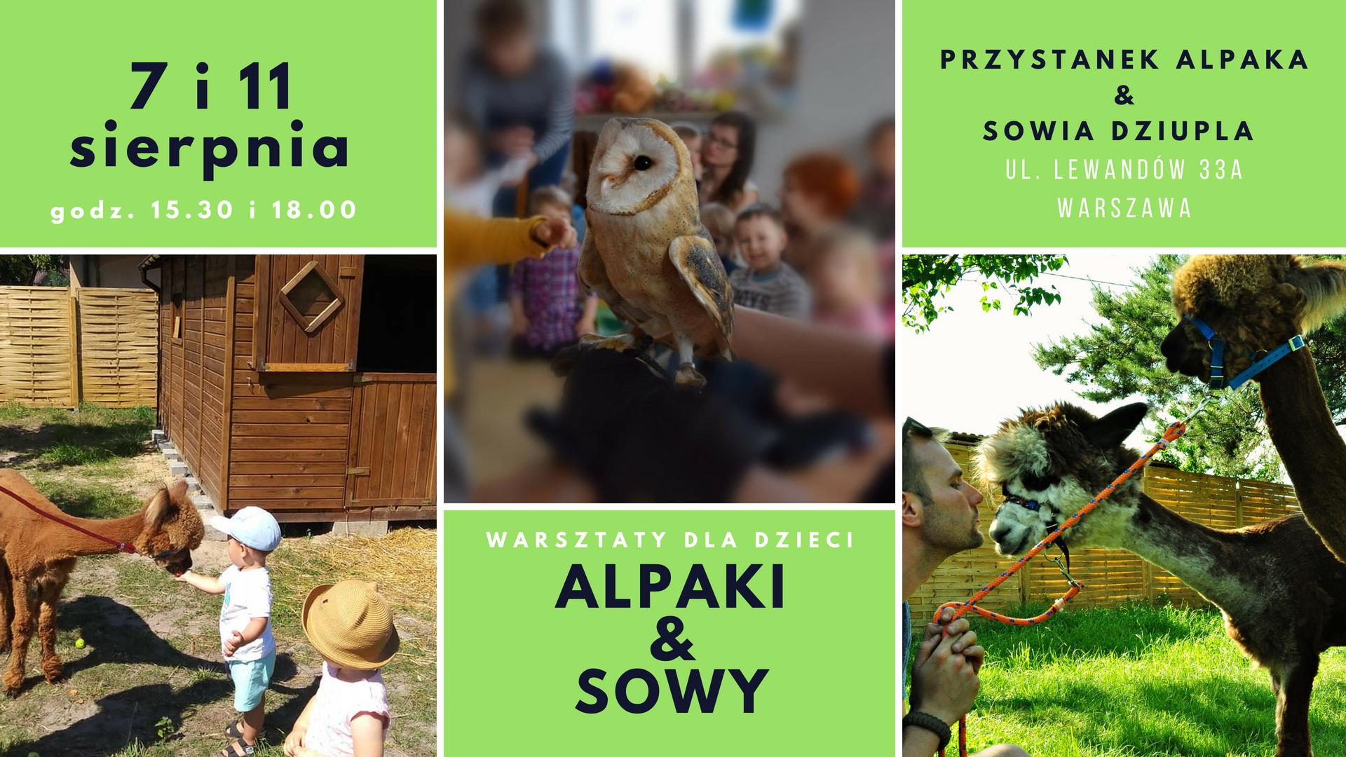 Warsztaty dla dzieci Alpaki & Sowy